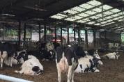 봄철 환절기에는 가축도 면역력 떨어져요 !